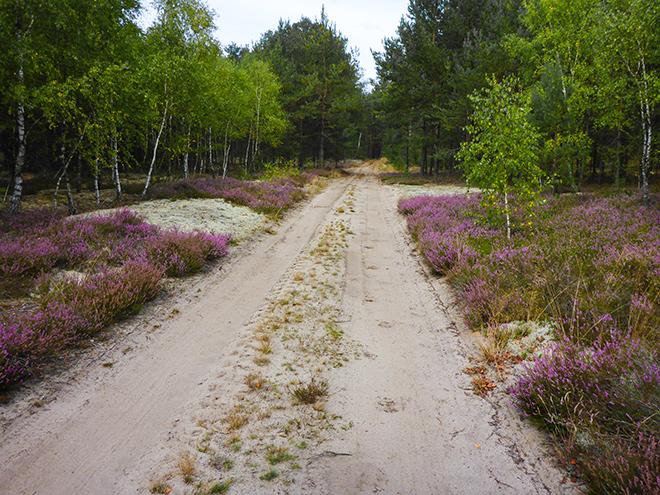 Heidelandschaft in Polen Kaschubien