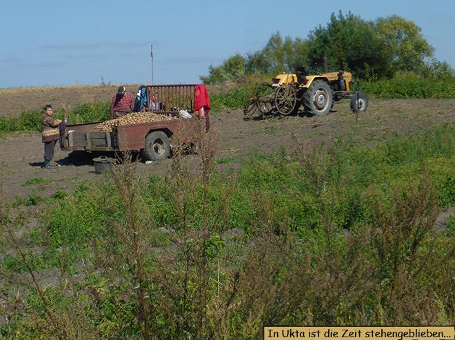 Kartoffelernte in Masuren Polen