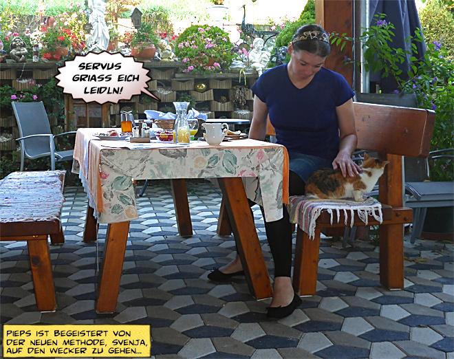 Frühstück Terrasse Katze