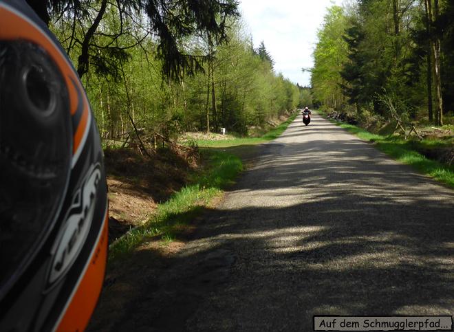 Motorrad im Wald