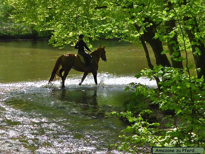 Camping Le Canada Pferd im Wasser