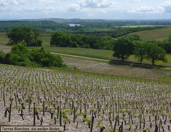 Weinberg Frankreich