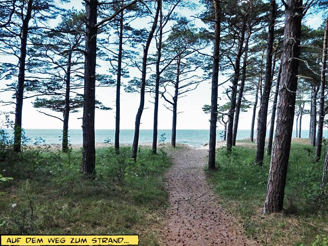 Weg durch den Wald zum Strand