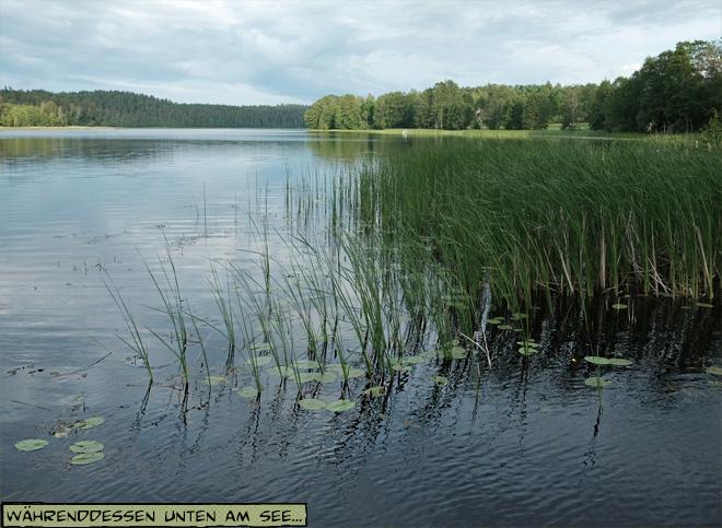 See mit Schilf und Seerosen