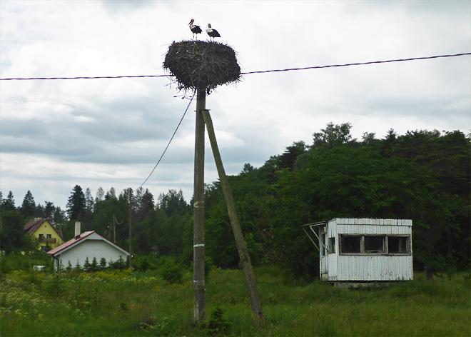 Störche in Estland