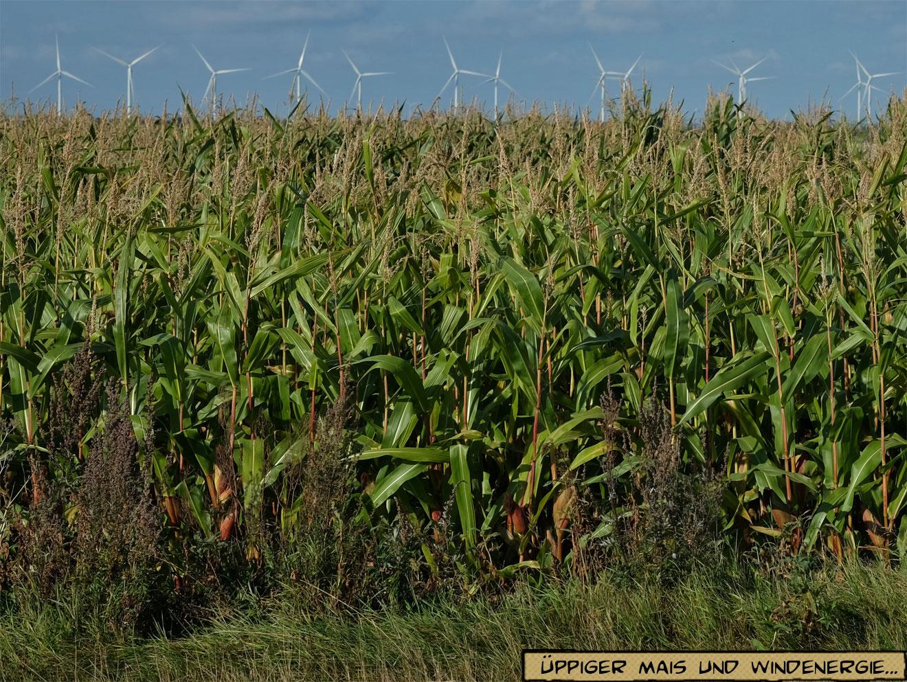 Mais, Biogas, Windenergie