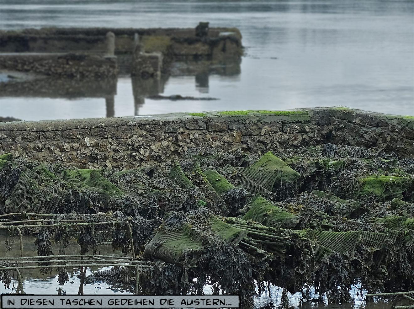 Austernzucht am Bélon Bretagne