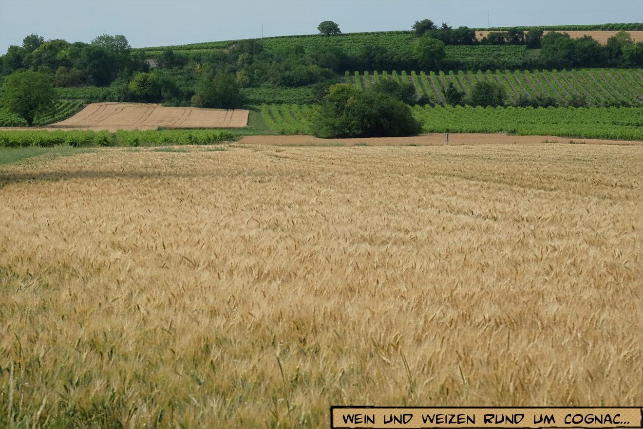 Kornfelder und Weinreben