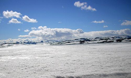 Glitzernder Schnee bis zum Horizont - dazwischen immer wieder Rentiere