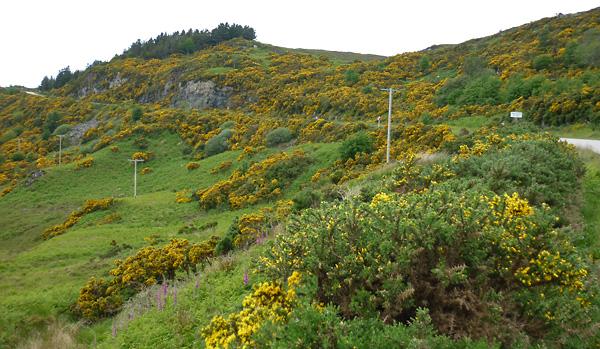 Ginster Schottland Highlands