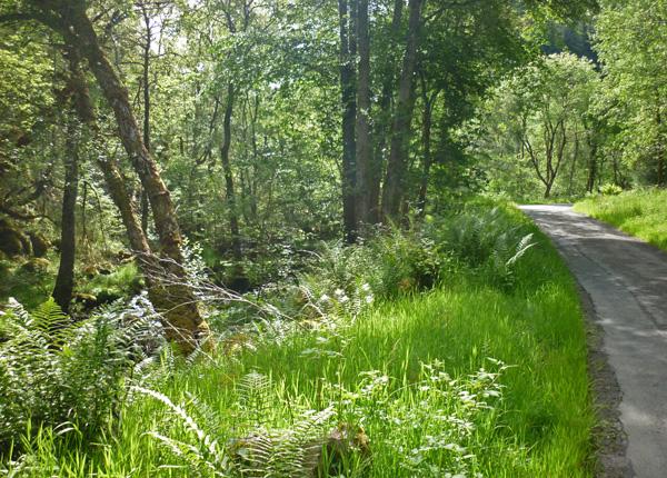 Urwald Schottland
