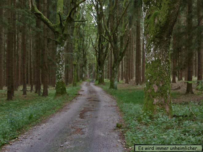 Waldweg Platanen tote Bäume