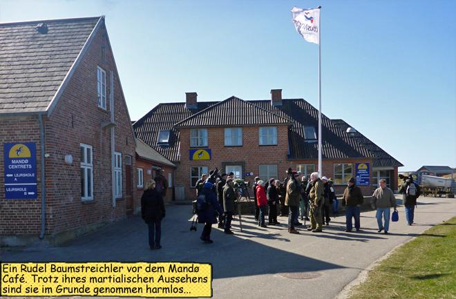 Baumstreichler vorm Mandø Café Vogelbeobachter