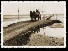 Alte Kutsche übers Watt nach Mandø