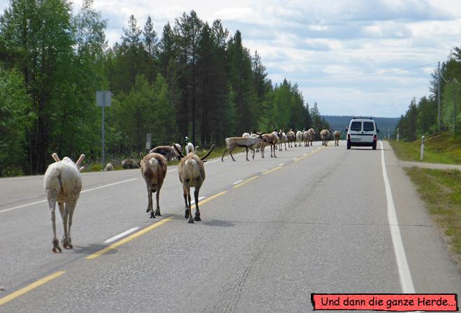 Rentiere auf der Straße Auto Finnland