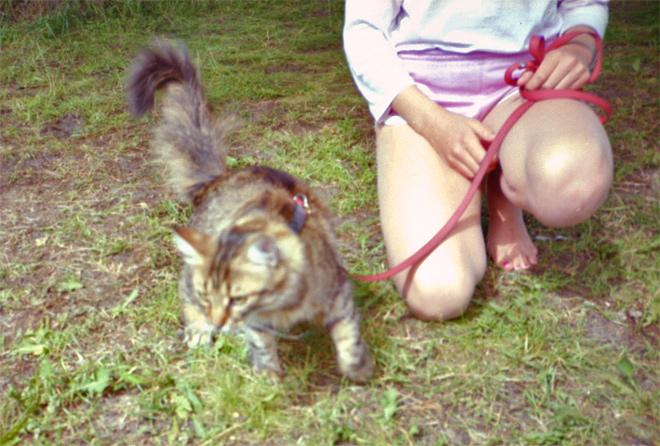 Das Mädchen mit der Katze an der Leine