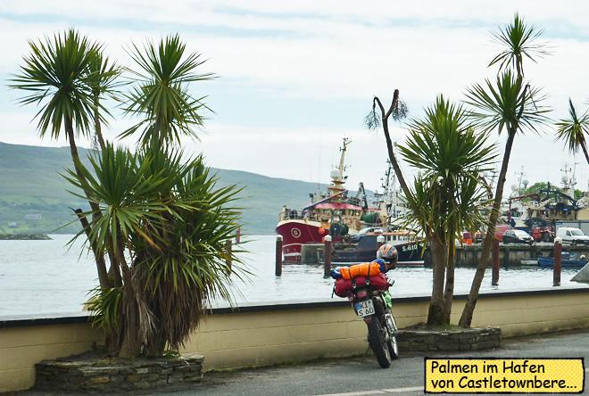 Castletownbere Palmen am Hafen